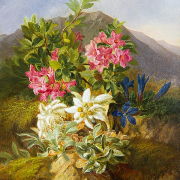 Josef Schuster, Alpenblumen